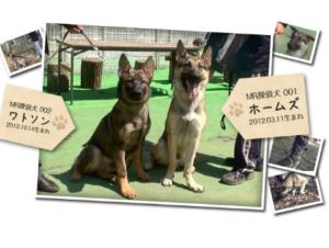 MR探偵事務所の家出・失踪人探索をサポートする探偵犬-画像
