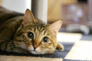 迷子猫-イメージ